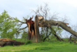 Sturmschaeden 110x75 - Herbststürme hinterlassen Verwüstungen in Millionenhöhe