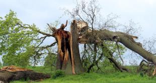 Sturmschaeden 310x165 - Herbststürme hinterlassen Verwüstungen in Millionenhöhe