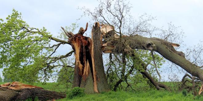 Herbststürme hinterlassen Verwüstungen in Millionenhöhe